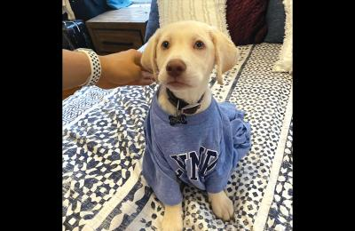 Bryson Malcolm's dog Riku, a yellow lab puppy, wears a blue sweater