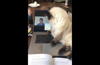 Erin M. Callahan's cat Rigby paws at a computer screen showing a Zoom lecture