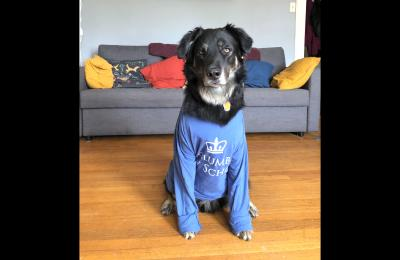 Madeline Hopper's dog TJ wears a Columbia sweatshirt