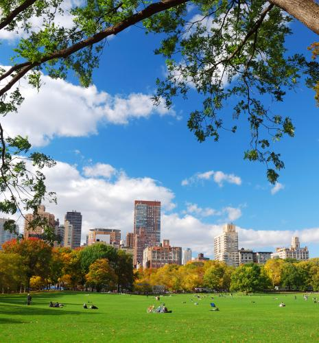 Sheep meadow in Central Park