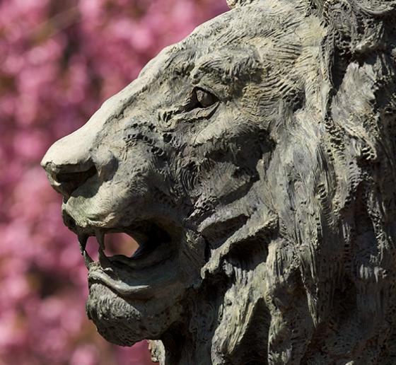 The Columbia lion in front of cherry blossom flowers