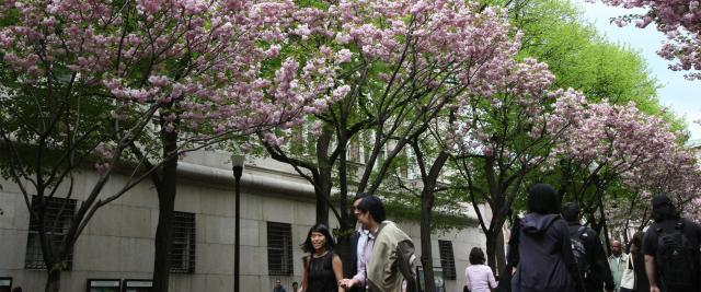 Blooming trees on College Walk