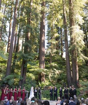 A wedding party stands in a grove of redwoods.